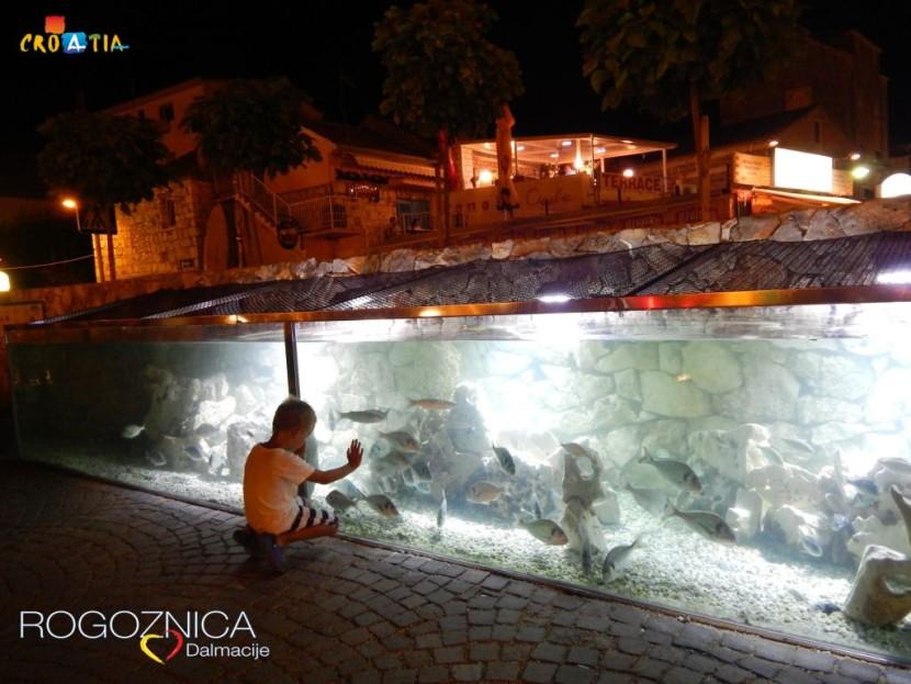 Rogoznica Akvarij 1
