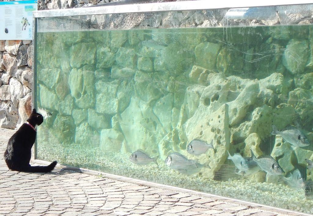 Rogoznica Akvarij 2